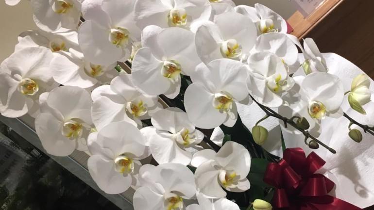 お祝いのお花をありがとうございました